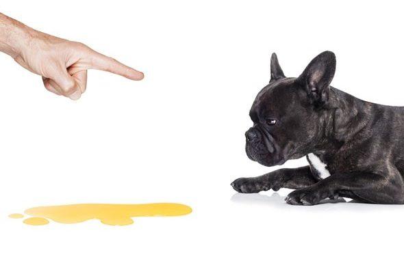 Aiuto, il cane fa la pipì in casa!