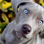 Il cane adolescente [Tempo: 2 min 15 sec]
