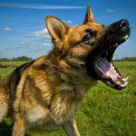 In Valtellina 2 cani uccisi perchè abbaiavano… [Tempo: 3 min 40 sec]