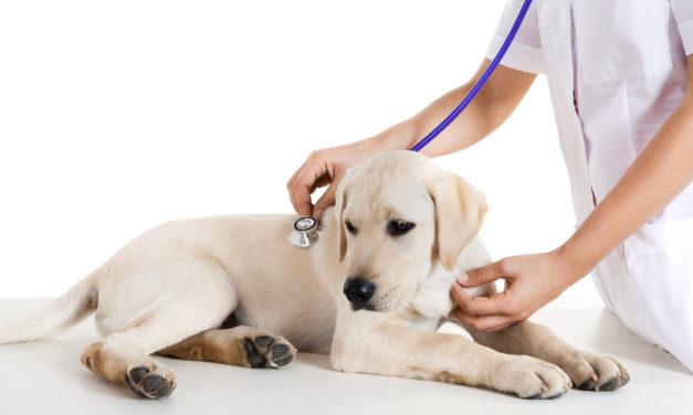 Il veterinario: mai più un nemico