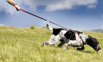 Sai perchè il tuo cane tira al guinzaglio?