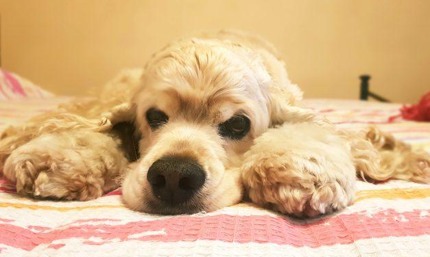 Cosa ha di buffo il tuo cane? ;-) [Tempo: 20 sec]